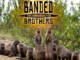 Banded Brothers